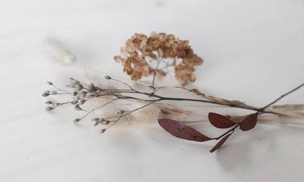 Nouveauté Avril : Beurre de KARITÉ Bio